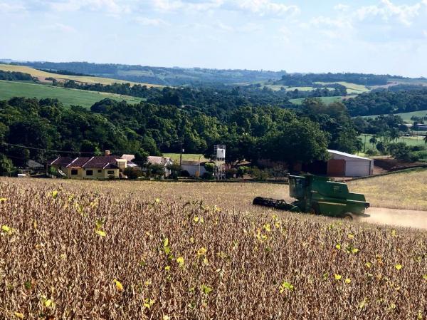 Do total de 5,9 milhões de hectares cultivados com soja no Estado, na safra 2019/2020, cerca de 5% já foram ceifados (Foto: Diones Roberto Becker)