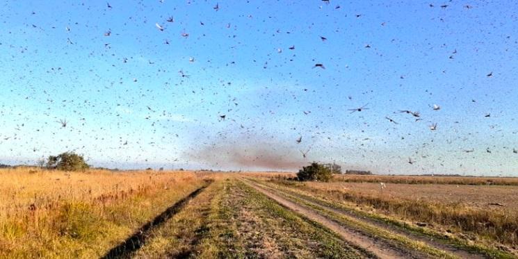 Ministra afirmou que espera que insetos não cheguem ao país | Foto: Serviço Nacional de Saúde e Qualidade Agroalimentar / Divulgação / CP