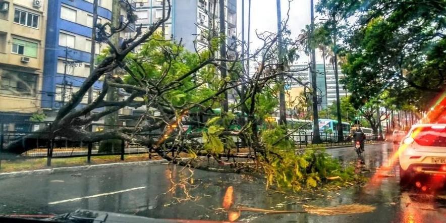 Árvore caiu na avenida Osvaldo Aranha, na região central de Porto Alegre | Foto: Raphael Gerzson / Especial / CP